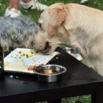 Bélgica abre bar especializado para cães