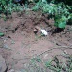 NO DIA DA CRIANÇA : Jovem aborta criança e irmã enterra o cadáver próximo de casa, em Catolé do Rocha