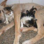 QUE APRENDA OS HUMANOS : Cachorro de rua adotado salva a vida de 6 filhotes de gato abandonados em lixão