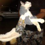 MUNDO ANIMAL BANDIDO : Gato é flagrado levando serras, brocas e celular para presídio