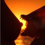 Revista de Pesca cria polêmica ao colocar mulheres nuas segurando peixes; veja fotos