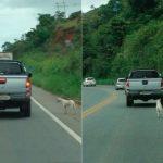 CRIME HEDIONDO : Dono abandona cachorro na estrada e animal tenta segui-lo por 4km