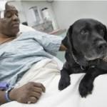 FIDELIDADE ANIMAL : Cão salta em trilhos de metrô para salvar dono que é cego
