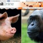 EU JÁ DESCONFIAVA : Humanos são fruto de mistura de chimpanzé e porco, diz geneticista