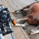 MAIS UM ACIDENTE NO INGA, DESTA VEZ MOTOCICLISTA COLIDE COM CAVALO CUJO CONDUTOR ESTAVA EMBRIAGADO