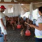 PROJETO RIO MAMANGUAPE- FASE ll: Criação de Frango torna-se alternativa para agricultores do agreste  Ass. de Imprensa COOPACNE