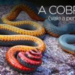 A COBRA  (leia com atenção)