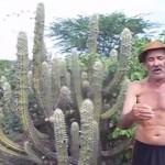 'Profetas da chuva' usam sinais da natureza e acertam sobre inverno no Sertão da Paraíba