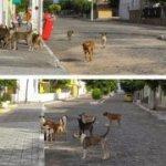 Vereador quer acabar com  cachorrada também nas ruas de Serra Branca