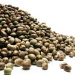 O PAI NÃO PODE PAGAR PELOS ERROS DOS FILHOS : Importação de sementes de maconha não é tráfico de drogas, diz Justiça