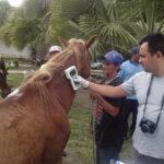 BURROTRAN  : Campina inicia emplacamentos (chipagem) de animais de forma pioneira no país