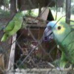 ATENÇÃO MUITO ATENÇÃO : Briga na fauna politica de Ingá