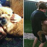 CURIOSIDADES : Os pais desse jovem não deixavam ele ter um catioro. Então ele adotou uma alpaca