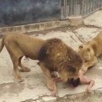 Estela Bezerra jogou Célio Alves aos leões, como se estivesse se livrando de algo contaminado – Por Milton Figueiredo