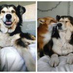 Não existe nada tão bonito quanto a amizade,e a amizade bonita e inusitada entre cachorro e raposa é o que você precisa ver hoje