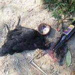 MACUMBA SEM GALINHA PRETA : Após vetar vaquejadas, STF julgará sacrifício religioso com animais