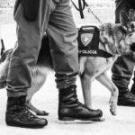 UTILIDADE PÚBLICA :  Policia Militar avisa