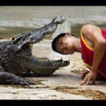 TRAGÉDIA : Crocodilo morde cabeça de treinador durante apresentação em circo – VEJA VÍDEO