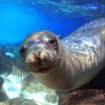 CENAS FORTES : Leão-marinho arrasta criança para o mar; veja o vídeo