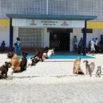 Vereador de JP quer atendimento para cães e gatos em hospitais públicos. (Itabaiana Hoje e Região )