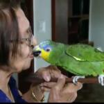 E SE LEOZINHO FOR DA IRMANDADE HEM ? : Papagaio Leozinho vive com idosa no Sertão da PB há mais de 20 anos.