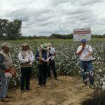 Algodão Paraíba: Governo leva metodologias de assistência técnica e extensão rural à Bolívia