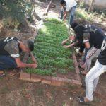 OLHEM AÍ MINHA GENTE : Hortas enriquecem aprendizado e promovem alimentação saudável nas escolas estaduais da Paraíba