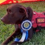 Cão do Corpo de Bombeiros ganha certificação internacional para atuar em busca de vítimas