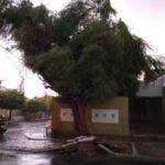Chuva intensa derruba árvores e causa queda de energia em Patos