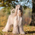 Conheça 6 raças de cachorro exóticas e raras