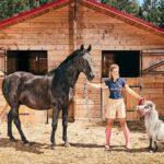 CURIOSIDADES : Menor cavalo do mundo mede 56 centímetros e entrou para o Guinness