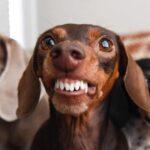 UTILIDADE PUBLICA E SEGURANÇA NACIONAL : Vereadores aprovam lei que proíbe cachorro de latir; multa é de R$ 23 mil