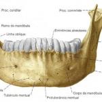 Mandíbula: quais são as partes + cirurgia para corrigir desvios e dor